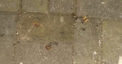 Semut Itu Makan Bukan untuk Sendiri
